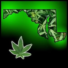 maryland marijuana hbtv hemp beach tv