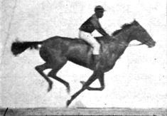 Muybridge Horse Gallop