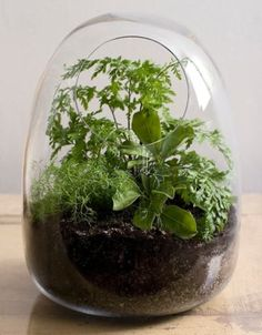 Inspiring Small Terrarium Designs with Applicative Plans : green home indoor glass planters. applicative home accessory plans,green home indoor glass planters,inspiring glass terrarium garden,modern indoor home accessory,small cute terrarium ideas Mini Terrarium, Build A Terrarium, Terrarium Plants, Glass Terrarium, Succulent Terrarium, Decoration Plante, Glass Planter, Flower Pots, Flowers