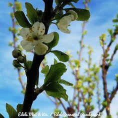 Edels Mat & Vin: Kalkunfilet med hasselback poteter, asparges og appelsinsaus ! Fruit