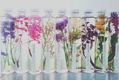 きれいが長持ちするお花! 今話題のハーバリウムが幻想的 - biche(ビーチェ)