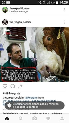 Look at the fear in this poor cow's eye and the look of pure hatred and cruelty in the man's. This makes me sick and I want to hurt HURT that guy like he hurts animals.