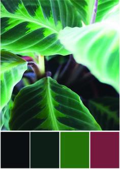Calathea Farben - Farbpalette Grün und kräftiges Rot - Tweed & Greet
