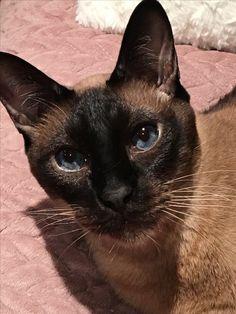 My cat Félix
