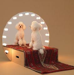 Architettura per cani