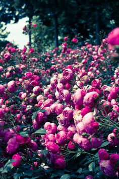 Heavenly! #flowers