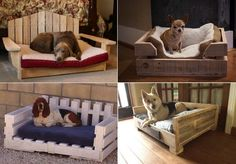 Dogs love frolicking by your feet and would have no problem sleeping on your bed given half a chance. They also love whiling the time away on any of your couches and will even have sweet dreams on your carpets or rugs. So why make the effort to do DIY ...