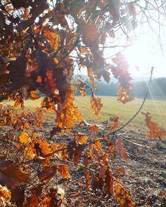 here comes the sun 🌞 Here Comes, Pumpkin, Sun, World, Outdoor, Outdoors, Pumpkins, The World, Outdoor Games