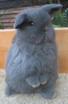 For those who are searching for a furry companion that is not only adorable, but simple to keep, then look no further than a pet bunny. Cute Little Animals, Cute Funny Animals, Cute Dogs, Cute Baby Bunnies, Funny Bunnies, Fluffy Animals, Animals And Pets, Dwarf Bunnies, Bunny Care