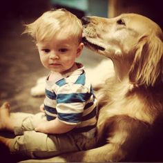 28 Pictures Of Golden Retriever Puppies That Will Brighten Your Day Animals And Pets, Baby Animals, Funny Animals, Cute Animals, Funniest Animals, Cute Puppies, Cute Dogs, Dogs And Puppies, Doggies