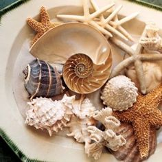 Here are some really easy to make table centerpieces! For example, assorted shells and other sea creatures arranged on a plate  ~*~ßë@©hñ~*~