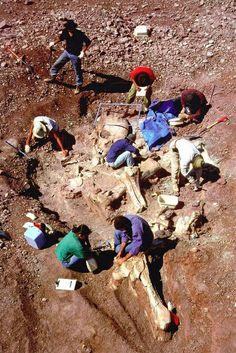 Gas exploration in Saudi Arabia reportedly uncovered human remains of gigantic proportions.