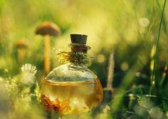Недорогое натуральное растительное лекарство с длительным сроком хранения, которое есть в каждой аптеке.   Касторовое масло!Получают касторовое масло из клещевины – растения семейства молочайных. Как …