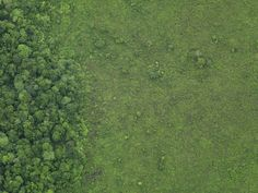 1525799.  Aerial view of a lush grass field meeting the edge of a forest.