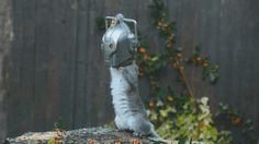 The first squirrel feeder I'd consider buying