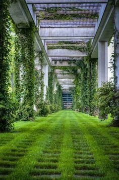 Green 'carpet'