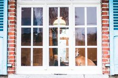 Picture taken in Les Ardennes - Belgium! :) #Dog photography #Dog photogrpher #Belgium #Belgique #Mariiana Capela