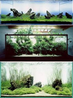 Artistic Aquarium