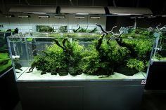 ADA Nature Aquarium Gallery | Beautiful moments of the galle… | Flickr