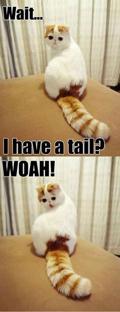 hahaha I just can't get enough of this adorable kitty!      And I don't even like cats, but this is too funny.
