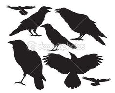 crow bird vector silhouette set