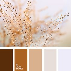 Brown colors inspiration