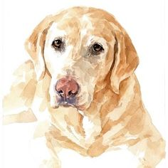 Lab Dog Custom Portrait, Watercolor, Labrador Retriever by david scheirer