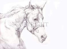 Detail Stipple Drawing By John James Valley Stippling Drawing, My Drawings, Moose Art, Horses, Detail, Animals, Animales, Animaux, Animal