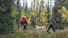 Jokaisella meillä on lempipaikkamme luonnossa. Se saattaa olla komea metsä, rauhaisa uimaranta tai esimerkiksi hyvä sieni- tai marjapaikka. Mutta kenen mailla se sijaitsee? Sillä ei ole väliä. Kunhan emme ole kenenkään pihalla, saamme nauttia luonnosta siellä missä se parhaalta tuntuu.
