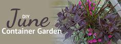 June DIY Container Garden from Pike Nurseries / Pike Nurseries