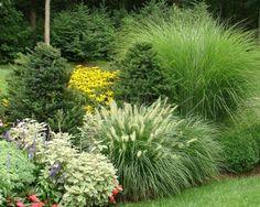 Wonderful Evergreen Grasses Landscaping Ideas 53