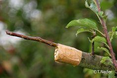 Kreisverband Coburg für Gartenbau und Landespflege e.V. M. Busch