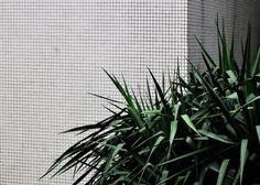 nikulin - без тебя дни считаю Go Green, Green Grass, Botanical Gardens Near Me, Another Green World, Moringa, Plants Are Friends, Stylish Kids, Ficus, Botany