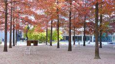Novartis_Headquarters-Forum-by-PWP_Landscape_Architecture-06 « Landscape Architecture Works | Landezine