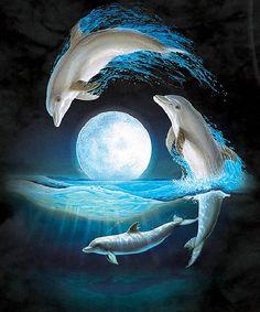 Delfin / Dolphin