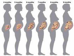 First #trimester #pregnancy: What to expect #motherhood #mother #parents #family #babies