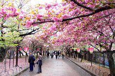 Du lịch Hàn Quốc, một đất nước xinh đẹp, nổi tiếng thế giới với phong cảnh tuyệt vời mà bất cứ du khách nào cũng muốn đến một lần. Vậy nên đến Hàn Quốc vào thời điểm nào? Hãy tham khảo bài viết dưới đây để chọn cho mình thời gian lý tưởng nhất nhé. Hàn Quốc là một điểm đến tuyệt vời, chúng ta...