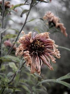 If we need a bigger flower that looks a little more alive, I still want it to be wilting. Plant Aesthetic, Flower Aesthetic, Autumn Garden, Autumn Home, Close Up Photography, Nature Photography, Photography Camera, Wilted Flowers, Flower Close Up