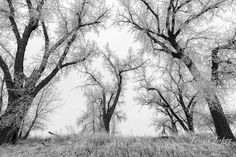 Black and white image of snow and frost covered trees on the Colorado plains. (© Tony's Takes)