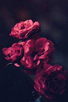Android Wallpaper - Beautiful Red Roses Phone Wallpaper Lockscreen HD Android iOS Check more at p. Red Flowers, Red Roses, Beautiful Flowers, Black Roses, Flower Backgrounds, Wallpaper Backgrounds, Wallpaper Lockscreen, Nature Wallpaper, Mobile Wallpaper