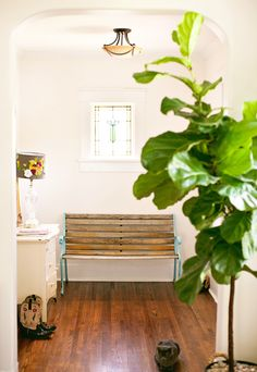 Must get a fiddle leaf fig plant! Rebekka Seale Sneak Peek via Design*Sponge