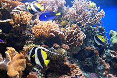 Ocean Life | Ocean Life | Flickr - Photo Sharing!