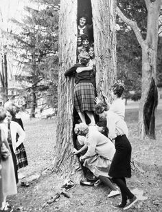"In 1961, students at the University of Maine decided to cram inside hollow trees. A ""Tree Stuffing"" contest to incite interest in their respective organizations, was held by the Pi Phi Sorority and Lambda Chi Alpha Fraternity at the University of Maine, when they challenged one another to the contest of hollow trees on the campus. The girls, after removing their shoes, stuffed 13 into the tree, the boys 15."