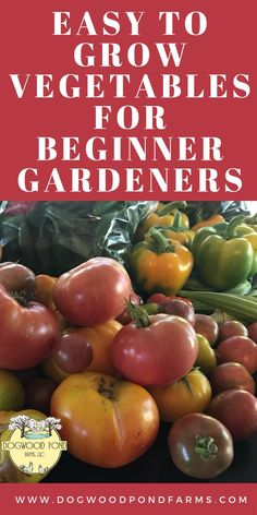 Are you a beginning gardener?  Try these easy to grow vegetables.