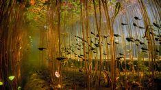 Tadpoles in Cedar Lake, near Campbell River on Vancouver Island, British Columbia, Canada (© Eiko Jones Photography)(Bing United States)