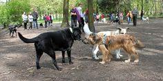Wybiegi dla psów Śląsk - tworzymy mapę wybiegów! Który z nich lubicie najbardziej?  http://psipark.pl/wybiegi-dla-psow/wybiegi-dla-psow-slask/