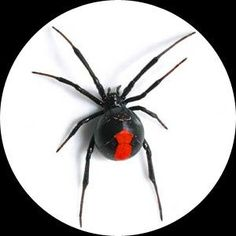 Keep this in mind if you start seeing lots of spiders around your place. Natural spider killer or preventer… take one cup of vinegar, one cup of pepper, a teaspoon of oil and liquid soap. Put it into a spray bottle and spray along the outside of your outside door and along windows