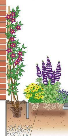 clematis kletterpflanze tipps pflegen garten terrasse balkon teich garten blumen pinterest. Black Bedroom Furniture Sets. Home Design Ideas