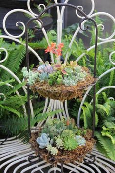 Succulent in Two Tiered Wrought Iron Stand