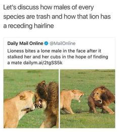 Why are you trying to compare human males with lion males as if they are the same? Lion males can literally kill a females babies and she will still mate and live with him.